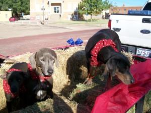 Parade Puppies - Crosbyton Chamber